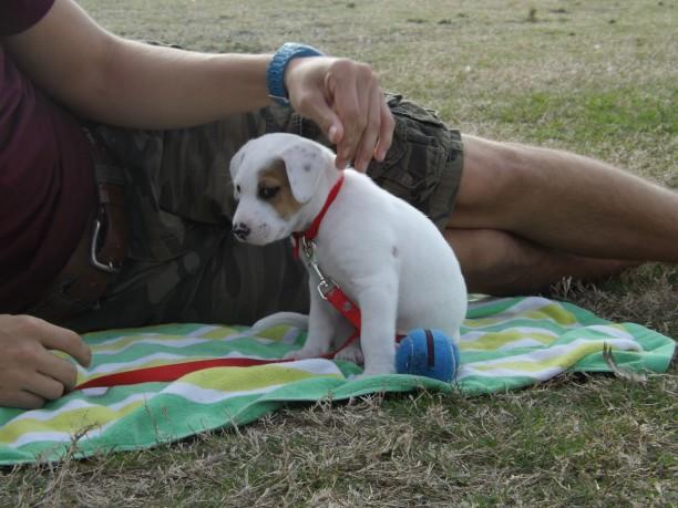 cute rescue puppy