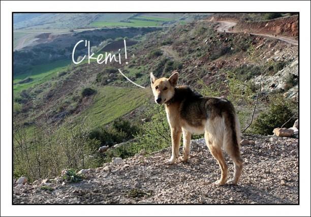 albanian dog