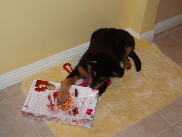 Dog Eating Toilet Paper Harmful