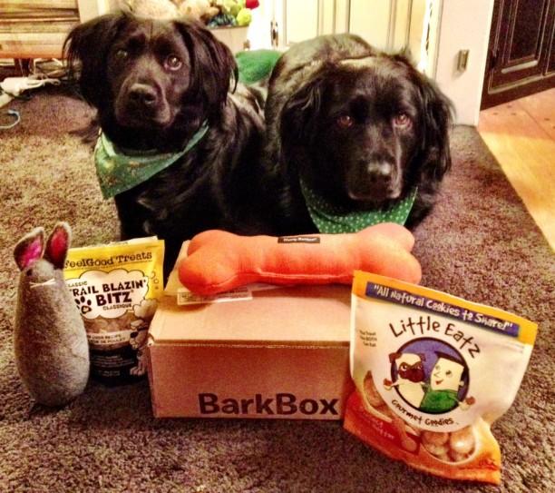 booboo with barkbox
