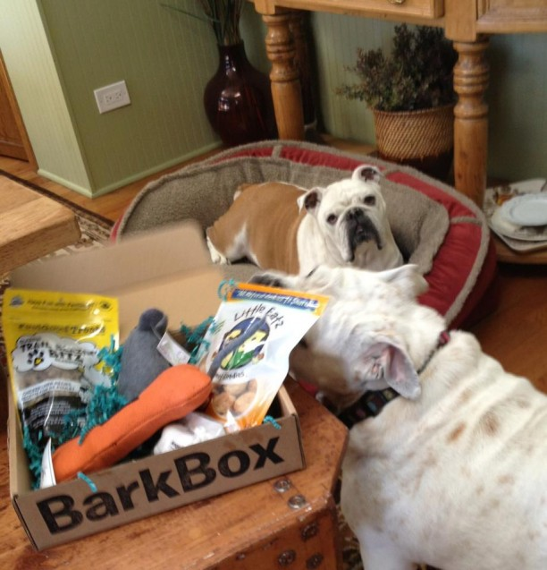 bullies with barkbox