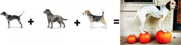 coonhound mix