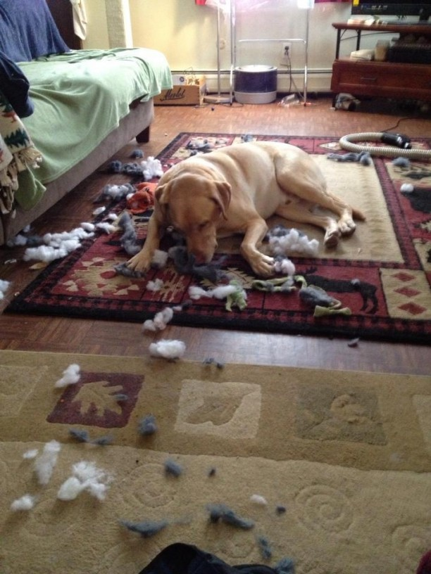 destroyed barkbox