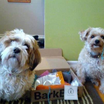 dogs with barkbox