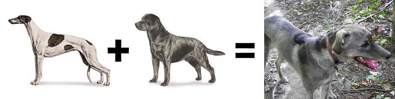 26 Mutt Math Equations - BarkPost