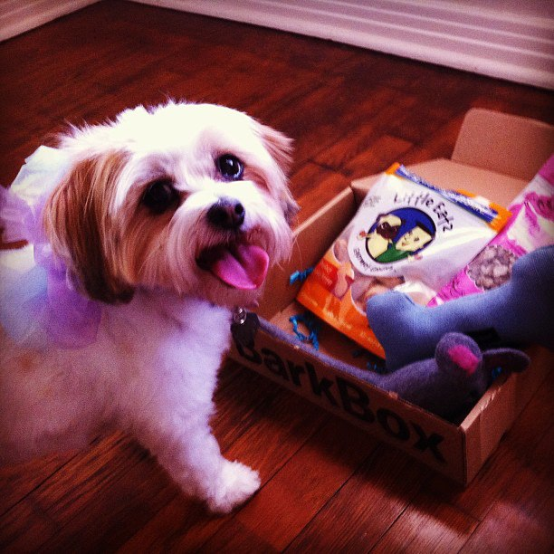 lily rose with barkbox