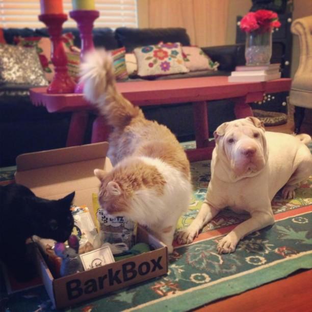 lola with cats and barkbox