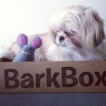 Translated: The Dogs' Thoughts on Their March BarkBoxes