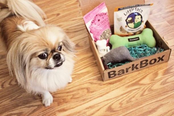 peke with barkbox