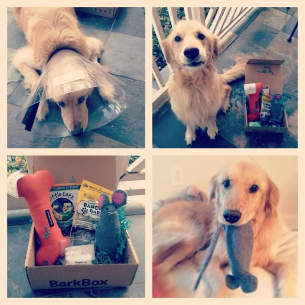 sick pup with barkbox