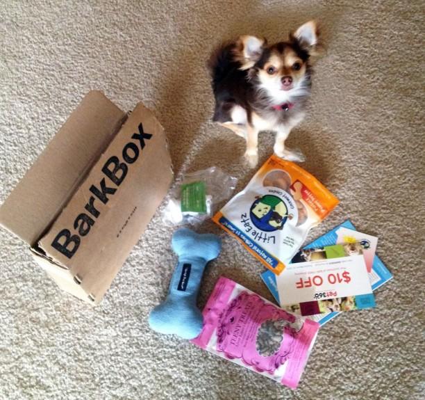 small dog barkbox