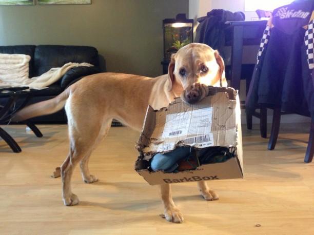 sydney with barkbox
