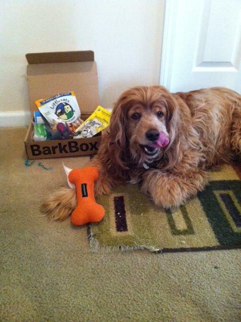 toby with barkbox