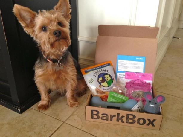 yorkie with barkbox