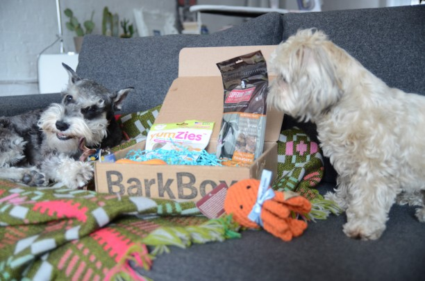 barkbox_office-1-3