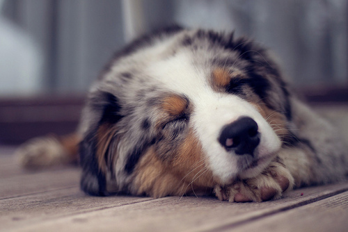 Only the Cutest Sleeping Puppy Photos on the Whole ...