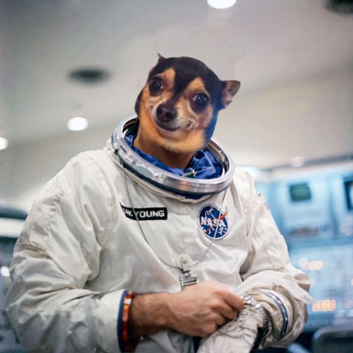 astronaut-chihuahua
