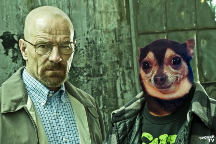 jesse-pinkman-dog