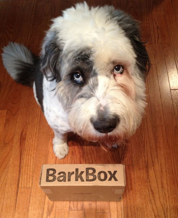 rudie with barkbox