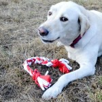 BarkBox Unboxing with Bridget the Yellow Lab