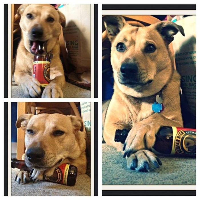 Jessica B I don't always drink beer, but when I do, I also use it as a chew toy and a pillow