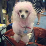 Cricket the Pink Service Dog's Star Beauty Secret
