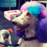 18 Things You'll Only See at a Dog Toy Convention