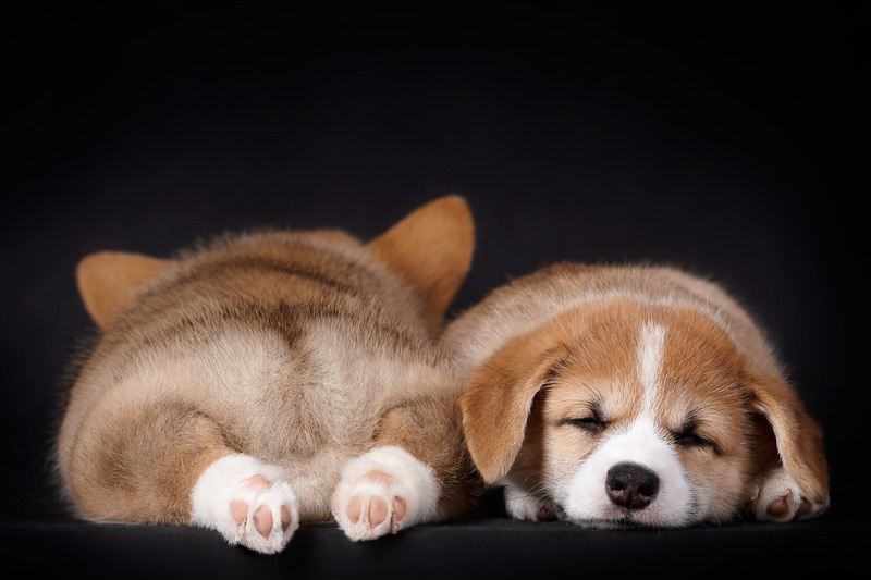 29 Puppies Who Are Totally Pooped Out
