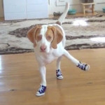 17 Dogs Wearing Pumped Up Kicks