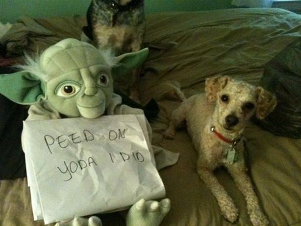 Yoda Dog Bed