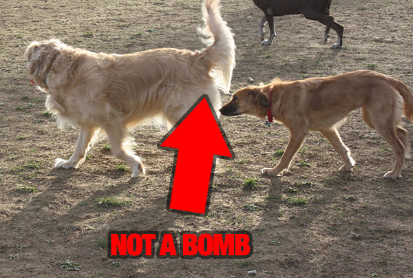 bomb-sniffer