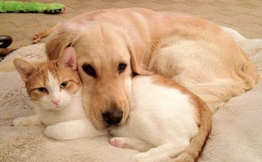 cats_dogs-image