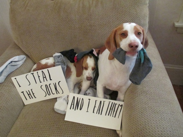 am an underwear eating jerk 28 of the best dogshaming pics