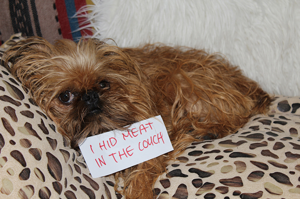 dog-shaming-hid-meat-1