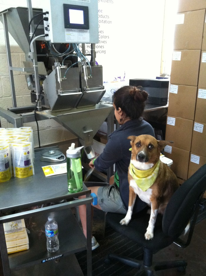 staff dogs even pitched in a helping paw