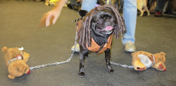 Michonne Walking Dead Dog Costume