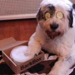 7 Genius Ways to Reuse Your BarkBox