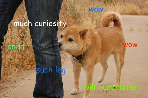 curiousdoge understand the \