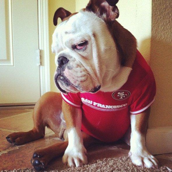grumpy dog 1