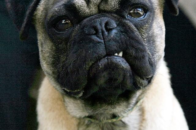grumpy dog 15