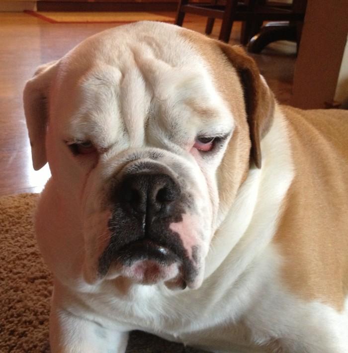 grumpy dog 2