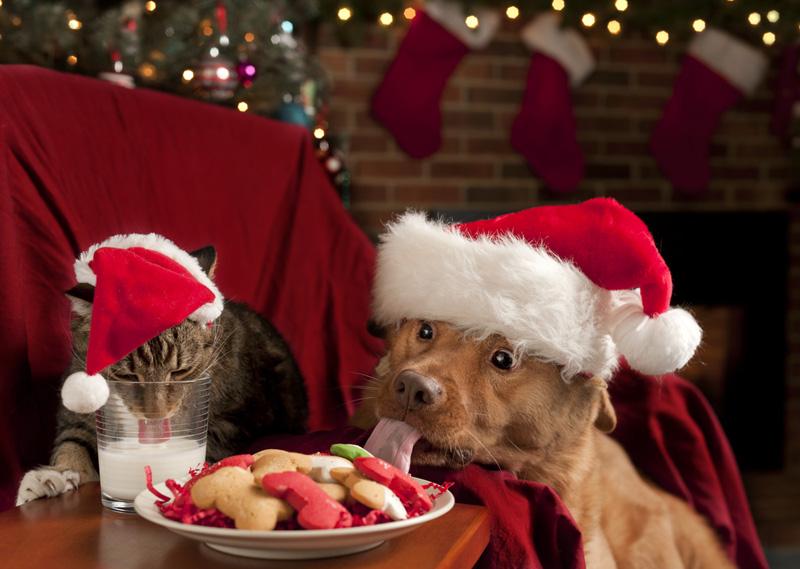 shutterstock_75208735_christmas