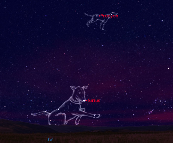 Constellation Dog Names