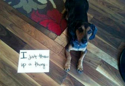ultimate dogshaming