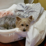 DIY: How To Make the Perfect Dog Bed Out of Dirty Laundry