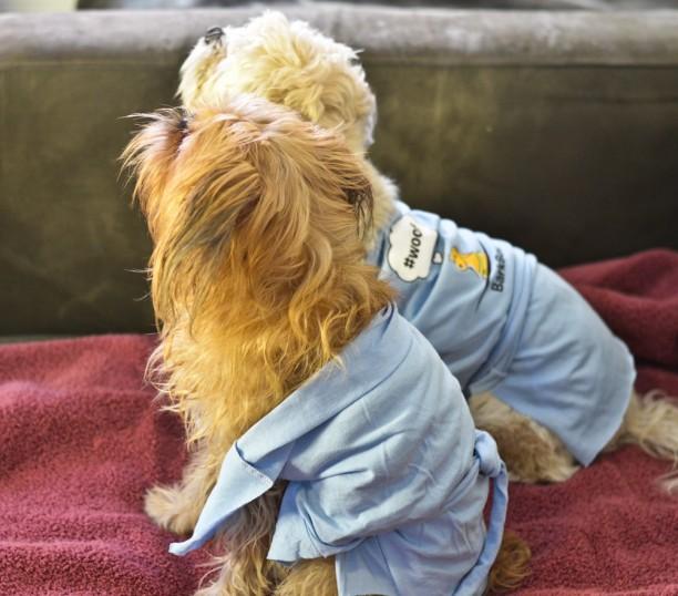 dog bath robes