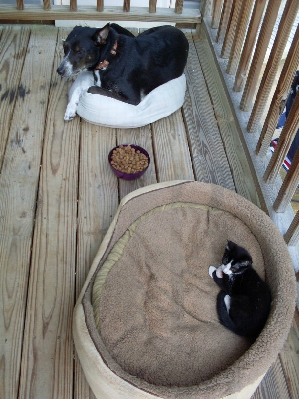 28 Stolen Dog Beds That Reiterate Cats Are Stingy Jerks