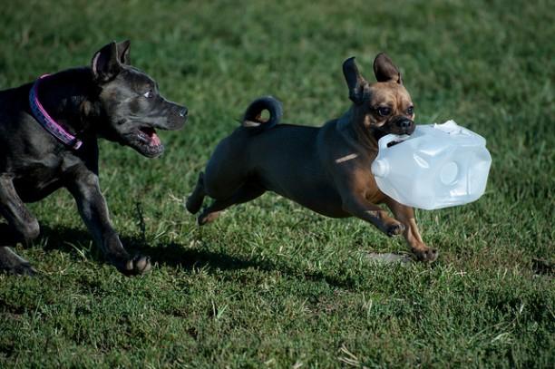 Penn Valley Dog Park Milk Jug Fun