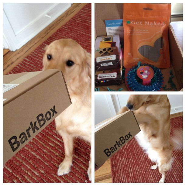 february barkbox