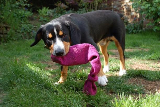 homemade dog toy